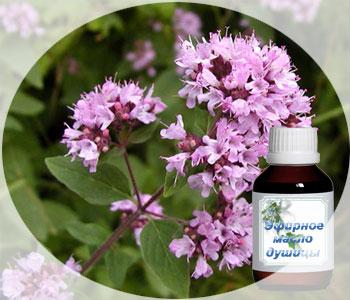 Эфирное масло душицы - польза, свойства и применение