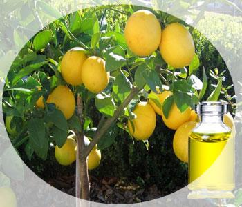 Эфирное масло петитгрейна – применение и свойства