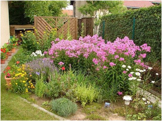 Как правильно выбрать цветы для сада