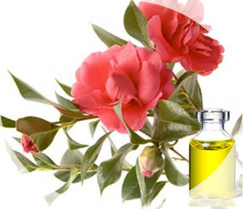 Масло камелии - удивительные свойства и неповторимый аромат