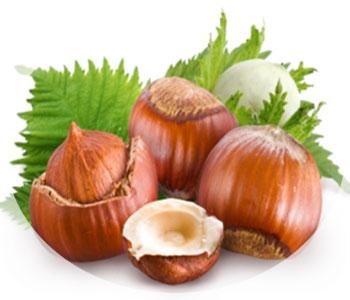 Масло лесного ореха свойства и применение