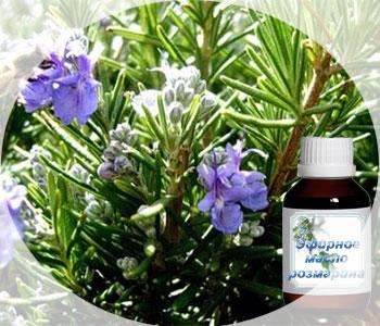 Сильный и ясный аромат эфирного масла розмарина